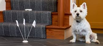 Indoor Dog Fence Banish Those Stair Gates Forever Dogfence