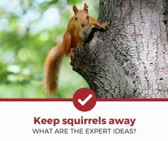 How To Keep Squirrels Away 5 Expert Ideas Pest Strategies