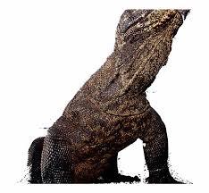 komodo dragon transpa png image hd