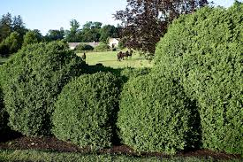All About Boxwood How Martha Cares For One Of Her Favorite Shrubs Martha Stewart