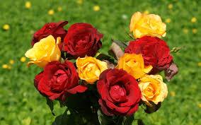 صور ورد حلوه اجمل اشكال الورد احبك موت
