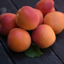 Organic Apricots - Frog Hollow Farm