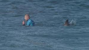 Shark attack surfer Mick Fanning back ...