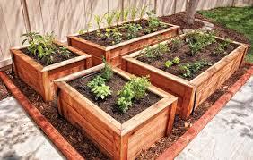 raised beds vegetable drip irrigation