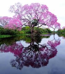 صور اشجار جميلة اجمل الاشجار فى الصور دلوعه كشخه