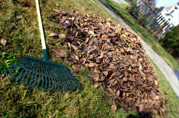 Best Rake for Wet Leaves
