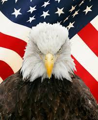 Bald Eagle With Flag Digital Vinyl Decal Sticker Custom Wall Graphics