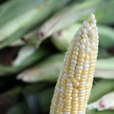 Some crops showing stress from dry conditions; yields should be affected |  News | nonpareilonline.com