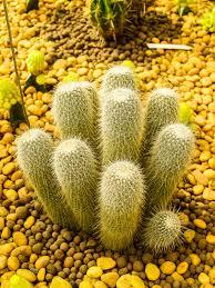 cactus desert green nature