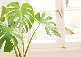 NASAも認めた天然の空気清浄機、空気清浄効果の高い観葉植物10選 ...