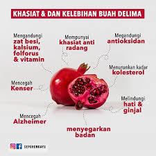 khasiat dan kelebihan buah delima