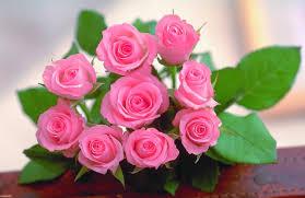خلفيات ورد جديدة 2020 أحلي اشكال باقات الزهور والورد فهرس