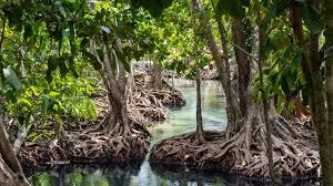 Los manglares, uno de los ecosistemas más ricos del planeta