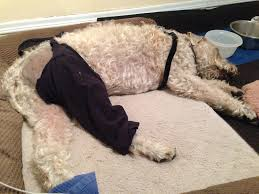 9 lessons learned from dog acl surgery