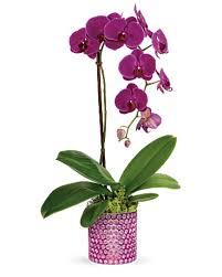 dazzling orchid in leesburg va