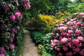 beautiful flower garden flower