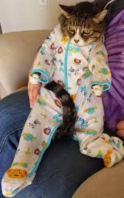 بازل تركيب صور قطط وكلاب مضحكة For Android Apk Download