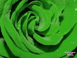 صور ورد اخضر 2013 صور ورد باللون الاخضر 2013 اجمل ورد بالاخضر