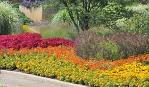 choosing annuals for your property
