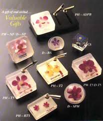 orchids collectibles plants