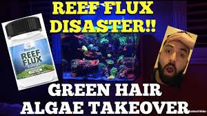 green hair algae disaster reef flux