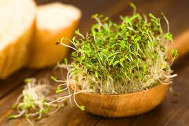 broccoli sprouts vs alfalfa sprouts