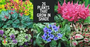 plants that grow in shaded area