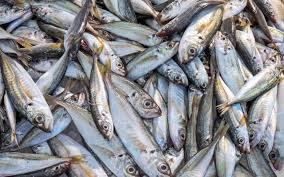 Fish fraud: seafood mislabelled in one ...