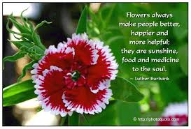 flowers quotes on images