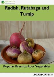 radish rutabaga and turnip ebook by