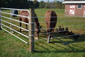 The 15 Best Electric Fence For Horses 2020 Reviews Guide