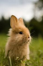 mobile hd rabbit wallpapers wallpaper