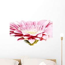 Amazon Com Wallmonkeys Pink Gerber Daisy Wall Decal Peel And Stick Graphic Wm144084 24 In W X 16 In H Home Kitchen