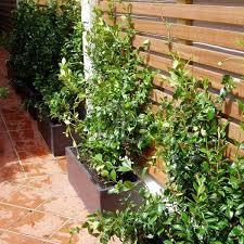 Pin On Flower Arrangements Garden
