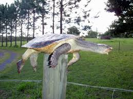 Do You Have Post Turtle Marketing Its Killing Your Sales No Smoke And Mirrors
