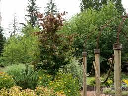 narrow trees for tight garden spaces