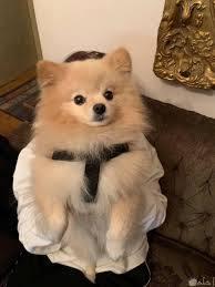 رمزيات كلاب