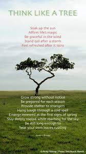 blue eyed ennis new year week one tree quotes nature quotes