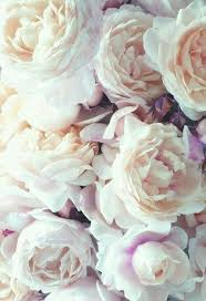 roses wallpaper disered by lane on