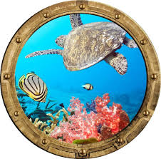 Amazon Com 24 Porthole 3d Window Wall Decal Tropical Reef Life 1 Rustic Port Scape Sea Turtle Coral Reef Ocean Under The Sea Removable Vinyl Sticker Home Kitchen