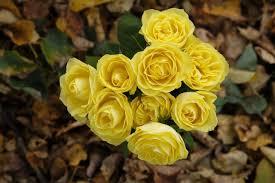 صور لـ ورود باقة أزهار زهور اوراق اشجار الخريف الأصفر