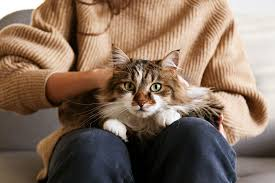 Why Do Cats Knead Explaining A Common Cat Behavior Daily Paws