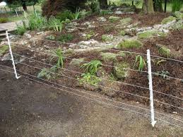 Electric Fencing For Dogs Electric Fencing Direct