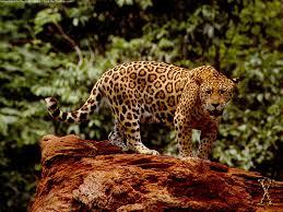 jaguar wallpapers hd wallpapers