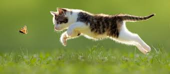 Pros And Cons Of The Outdoor Life For Cats Perfect Fit