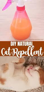 natural cat repellent for home garden