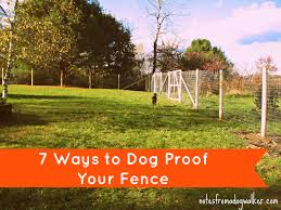 Peace In The Yard 7 Ways To Dog Proof Your Fence Notes From A Dog Walker