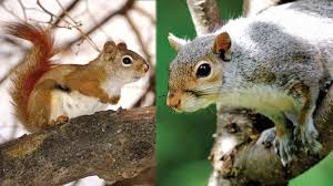 Learn About Squirrels Mass Gov