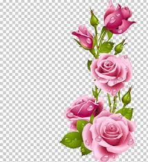 frames rose flower png clipart