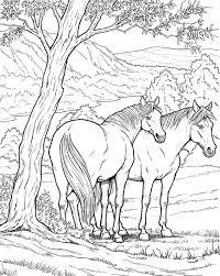 Paarden Kleurplaat Kleurplaat Kleurplaatje Nl